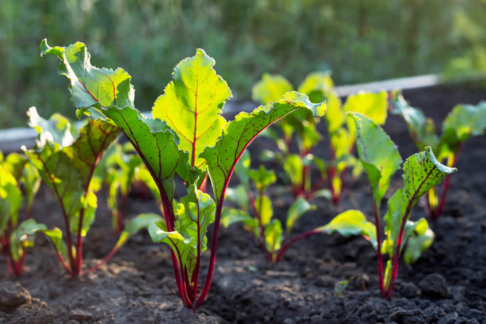 Planting A Vegetable Garden For Beginners