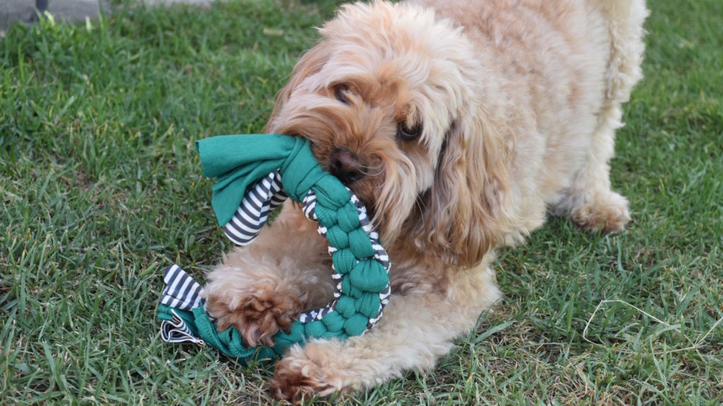 Make Your Own Dog Clothes