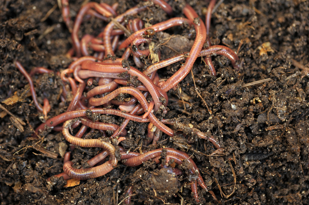 How To Find Earthworm Acquiring Customers